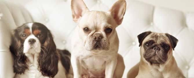 Понос у собаки: что делать если у собаки понос