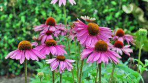 Лучшие 10 Противовирусных Трав Для Поддержания Вашего Здоровья